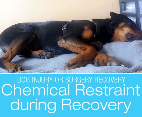 Dog Recovery Chemical Restraint: Our Use of Trazodone during Cookie's Iliopsoas Injury Recovery