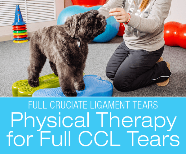 Canine Full Cruciate Ligament Tears: Physical Therapy for Full CCL Tears
