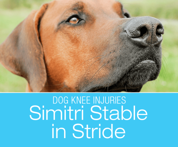 Simitri Stable in Stride: A Unique Surgical Option to Treat Cruciate Injuries in Dogs