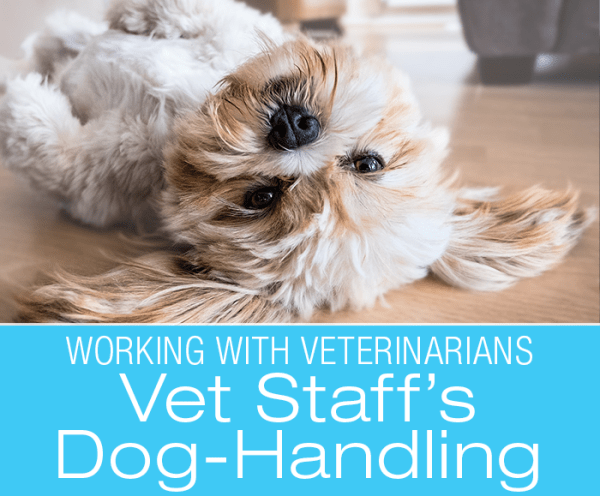 Vet Staff Dog-Handling Skills: Has Your Dog's Physical Therapist Taken Dog Training Classes?