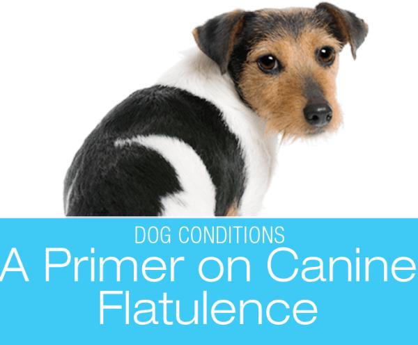 Primer on Flatulence in Dogs