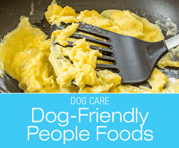 Dog-Friendly People Foods: Can I Give My Dog Scrambled Eggs? What Do I Do When I Run out of Dog Food