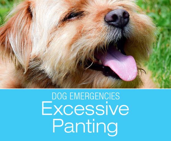 Is Panting an Emergency?
