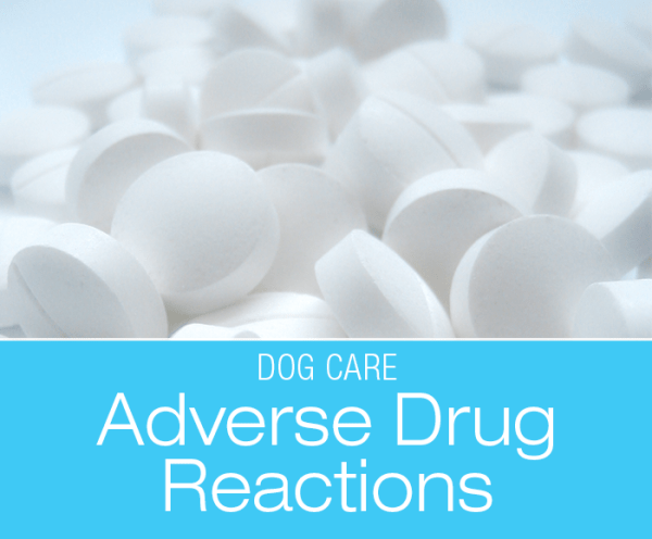 Adverse Drug Reactions in Dogs: Our Dogs' History of Adverse Reactions to Medications