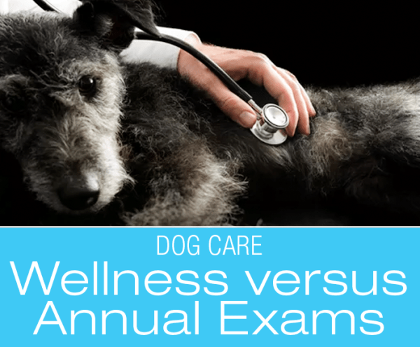Dog Wellness Exams How To: What's the Difference between Annual Exams and Wellness Exams?