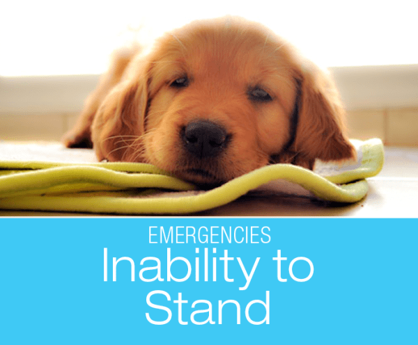 Is Inability to Stand an Emergency? Sudden Inability to Stand