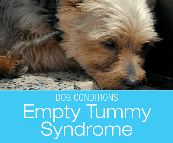 Morning Stomach Upset in Dogs: What Do We Use for the Occasional Bilious Vomiting Syndrome?