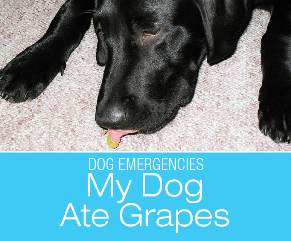 Is Ingestion of Grapes an Emergency?