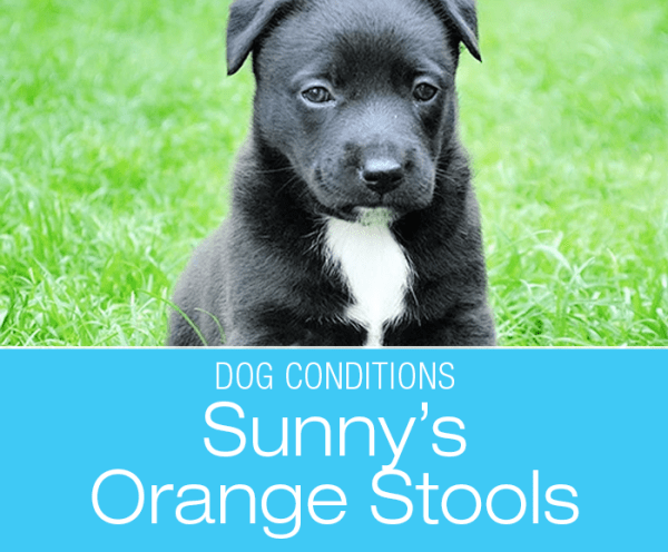Orange Stool in a Dog: When Everything that Could Go Wrong Does—Sunny's Orange Stools