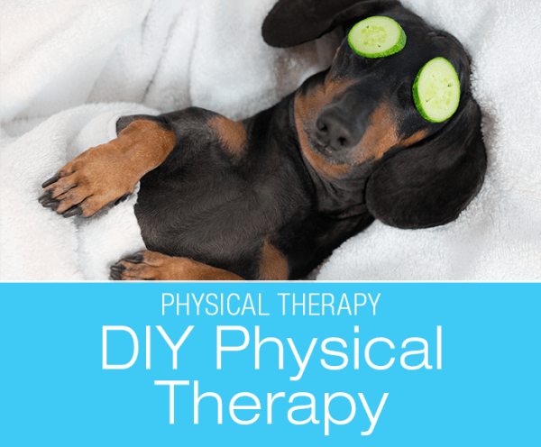 DIY Physical Therapy for Dogs: What Can You Do at Home?