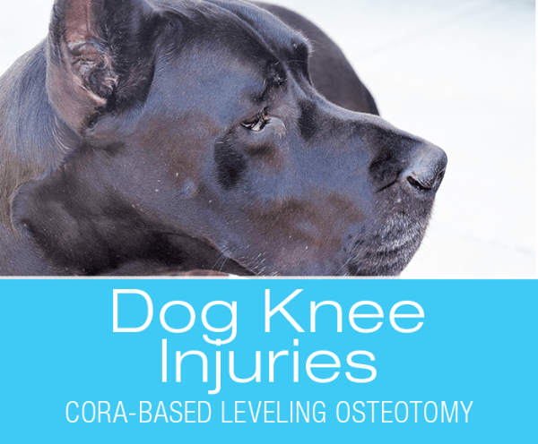Cora-based Leveling Osteotomy: My Two Cents on (CBLO) Repair