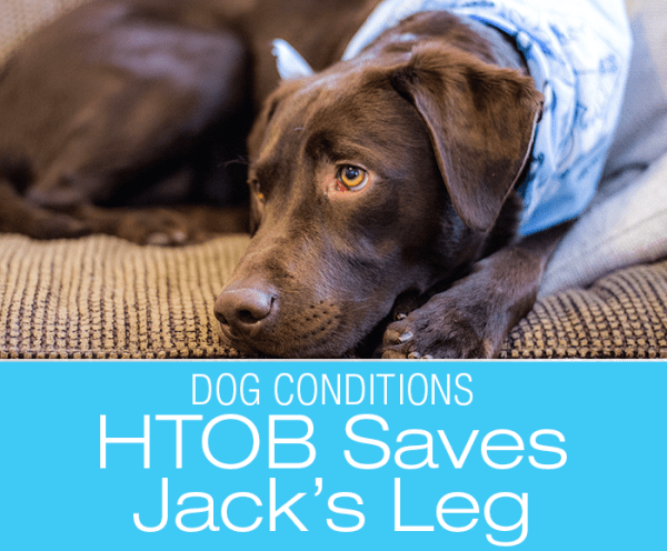 HBOT Treats Spider Bite: Hyperbaric Oxygen Therapy—Jack's Spider Bite