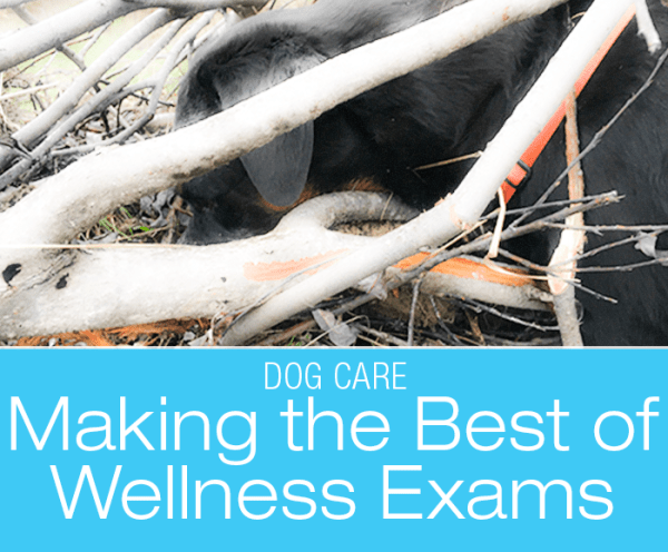 Making the Best of Wellness Exams: Cookie's Latest Check-Up