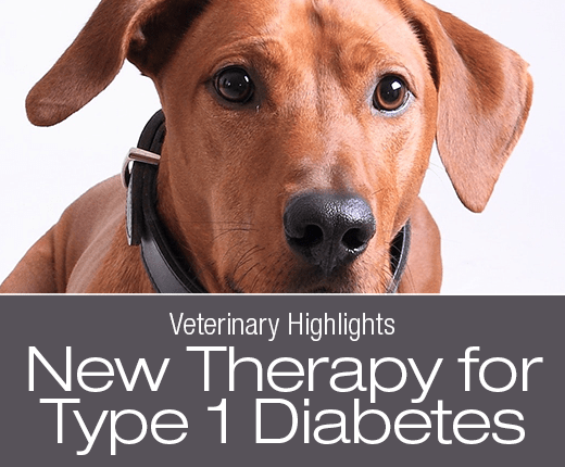 Veterinary Highlights: Reversing Type 1 Diabetes in Dogs without Insulin? IU Therapy