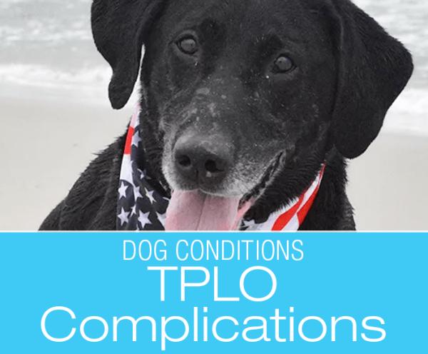 TPLO Complications: Dog Knee Injuries—Nigel's TPLO Broken Drill Bit