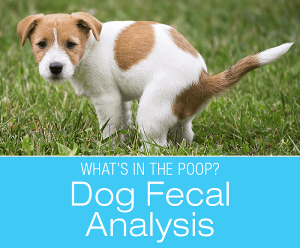 Canine Fecal Analysis: What Can Your Dog's Poop Reveal About Their Health?