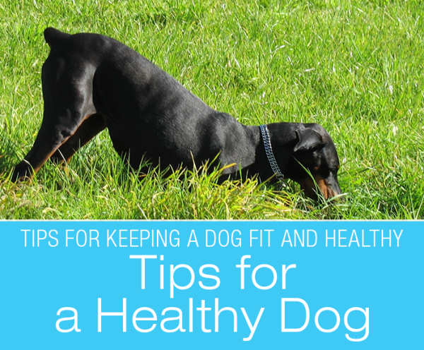 Tips for a Healthy Dog: My Favorite Things for Keeping A Dog Fit and Healthy