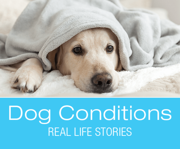 Pyometra in Dogs: Phoenix's Lethargy and Loss of Appetite
