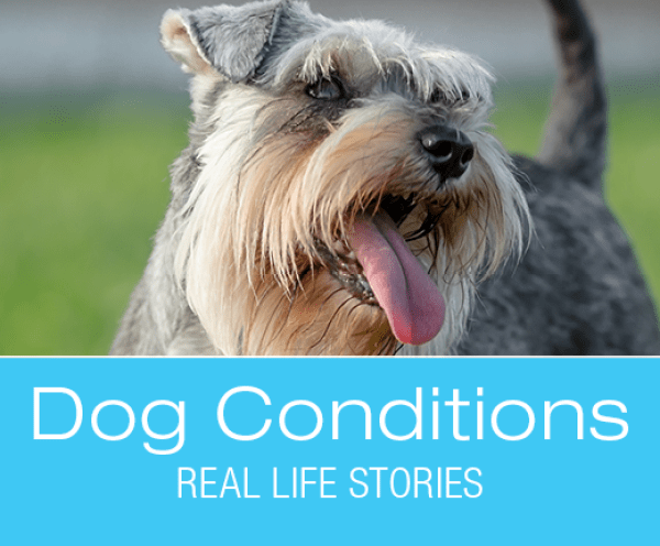 Bladder Stones in Dogs: Zaida's Potty Accidents