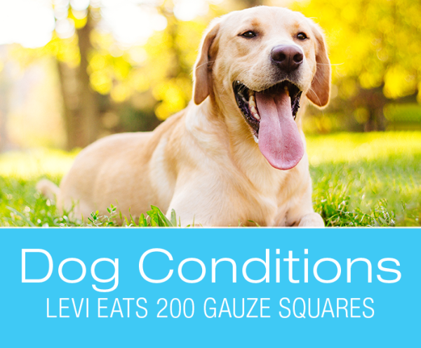 Dog Foreign Body Ingestion: Levi Eats 200 Gauze Squares