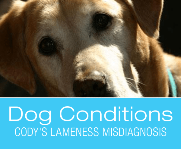 Lameness in Dogs: What Would You Do If It Was Your Dog: Cody's Lameness Misdiagnosis