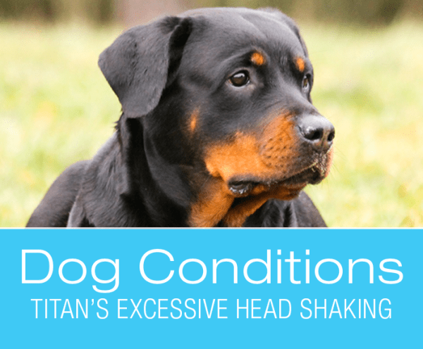 Ear Infections in Dogs: Titan's Excessive Head Shaking