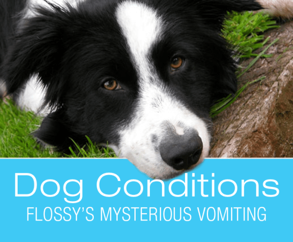 Vomiting in Dogs: What Would You Do If It Was Your Dog? Flossy's Mysterious Vomiting
