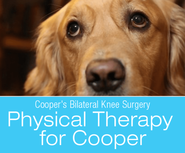 Canine Bilateral Knee Surgery: Physical Therapy for Cooper