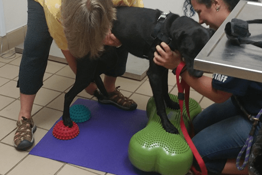 Canine Balance and Core Exercises: FITBone