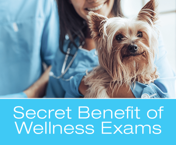 Veterinary Wellness Exams: The Secret Benefit