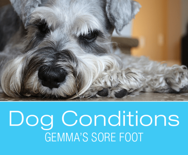 Foot Lesions in Dogs: What Caused Gemma's Sore Foot?