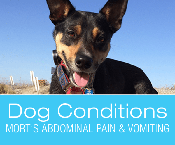 Dog Conditions: Abdominal Pain & Vomiting in Dogs: What Would You Do If It Was Your Dog? Mort's Story.