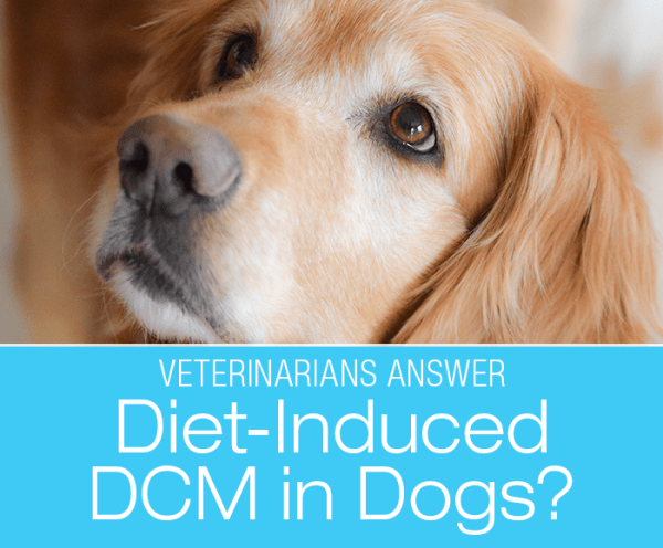Diet-Associated DCM in Dogs