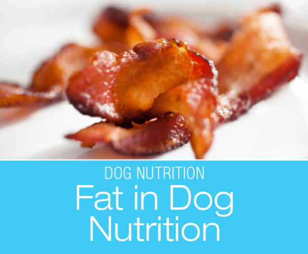 Fat in Dog Nutrition: Give Me Some Bacon