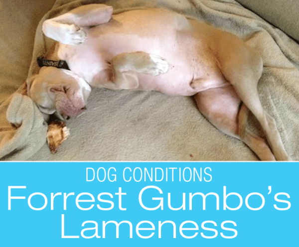 Diagnosing Lameness in Dogs: Forrest Gumbo's Misdiagnosis. What Would You Do If It Was Your Dog?