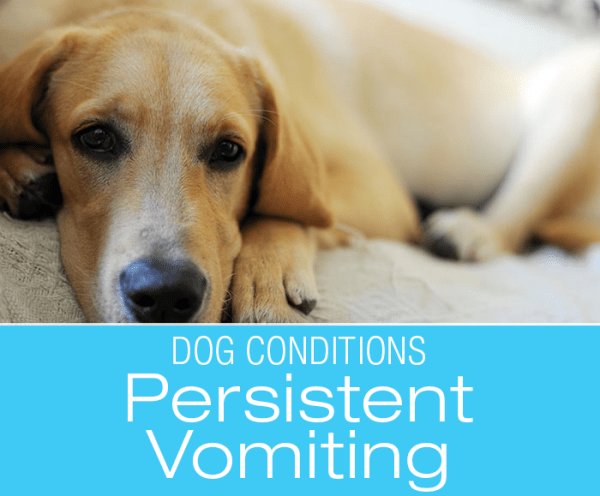 Persistent Vomiting in Dogs: Stacey's Persistent Vomiting