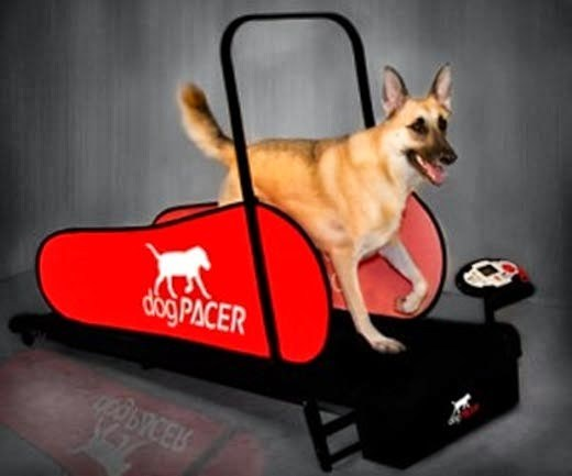 Canine Surf underwater treadmill