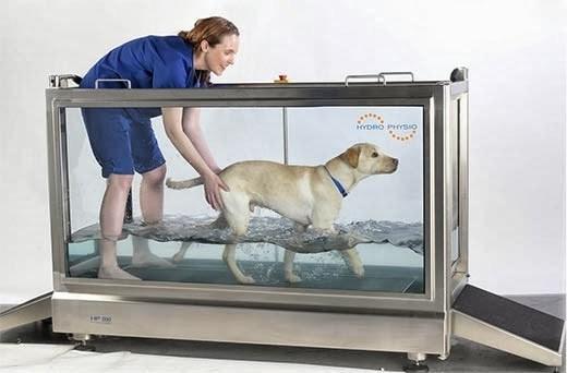 Treadmills for Dog PT: A Comparison of Canine Treadmills