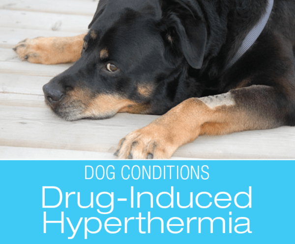 Adverse Drug Reactions in Dogs: Drug-Induced Hyperthermia