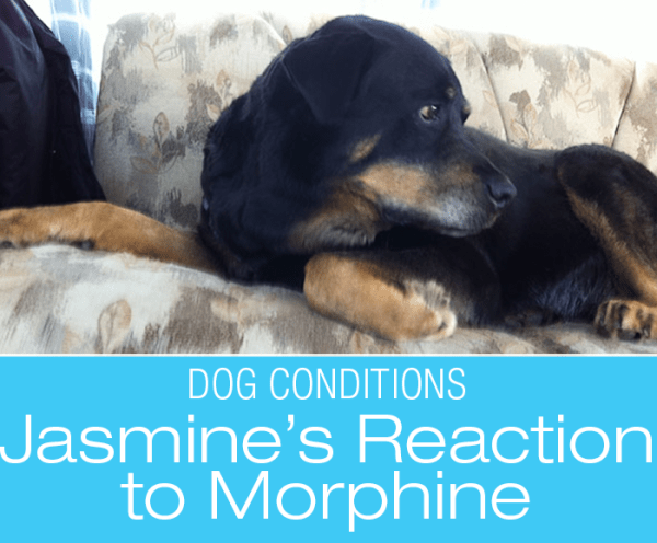 Adverse Drug Reactions in Dogs: Morphine