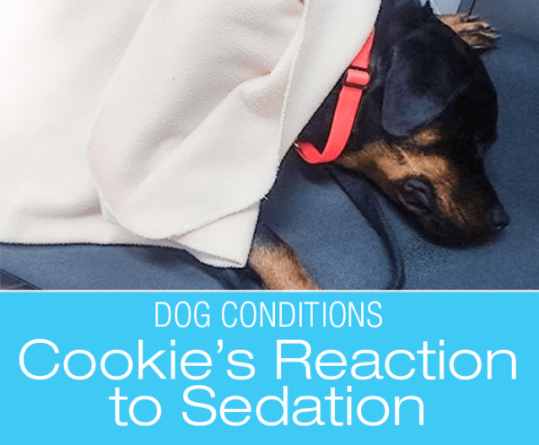 Cookie's Adverse Reaction to Sedation