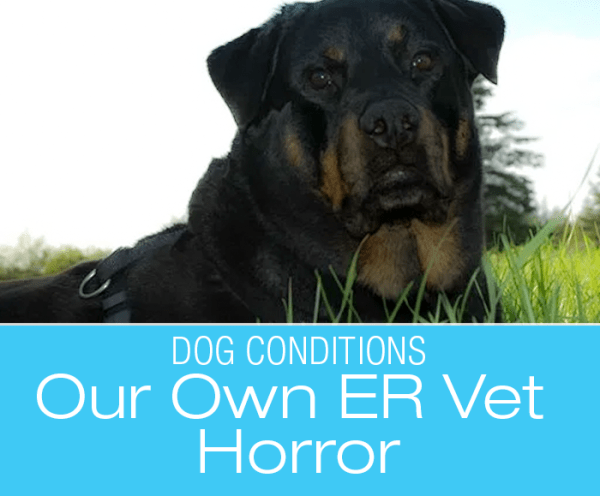 Our Own Emergency Vet Horror: Jasmine's Brush with Death—Veterinary Mistakes, Misdiagnoses, and Miscommunication
