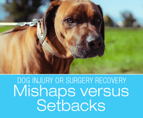 Dog Injury or Surgery Recovery: Mishaps versus Setbacks