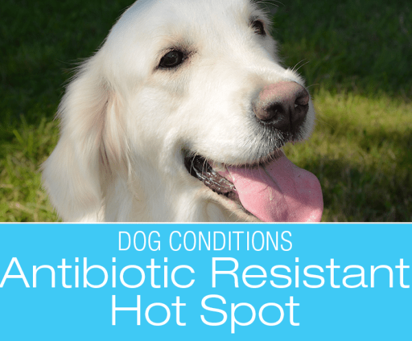 Antibiotic-Resistant Hot Spot: Max's Story