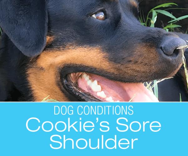 Observation Skills for Dog Owners: Cookie's Shoulder