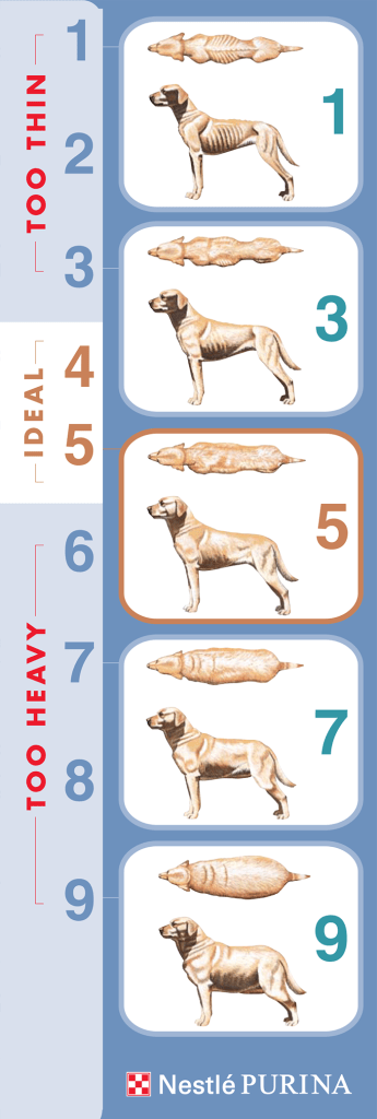 Canine body condition scale