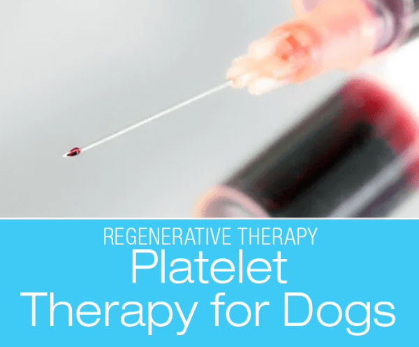 Platelet Therapy for Dogs: Regenerative Veterinary Medicine