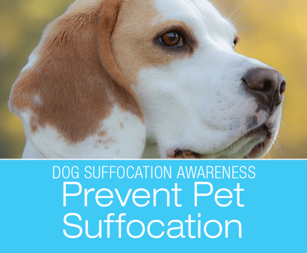 Dog Suffocation Awareness: Bree Almost Suffocated In A Chip Bag—Prevent Pet Suffocation