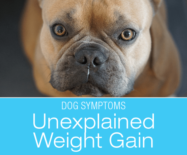 Why Is My Dog Gaining Weight: Is It the Food?