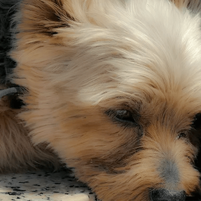 My Dog's Vomiting: Bilious Vomiting Syndrome